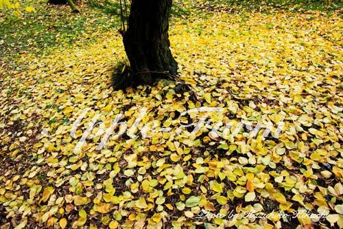 りんご園の秋
