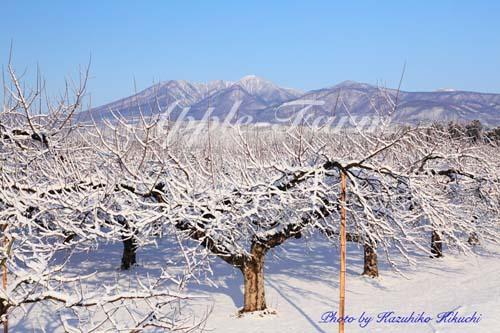 雪のりんご畑と名峰高原山
